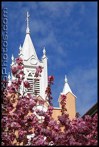 san felipe de neri church on Old Town Plaza in Albuquerque, framed by a flowering plum tree
