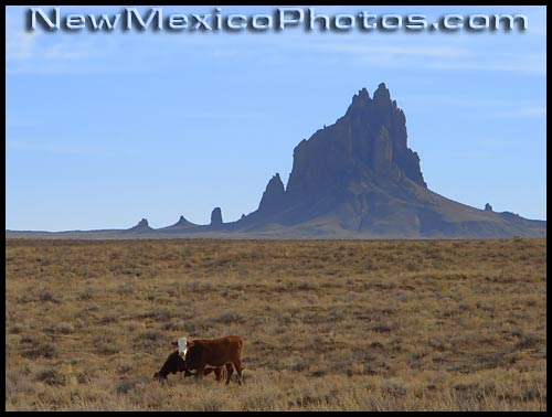 photo of cows grazing near shiprock