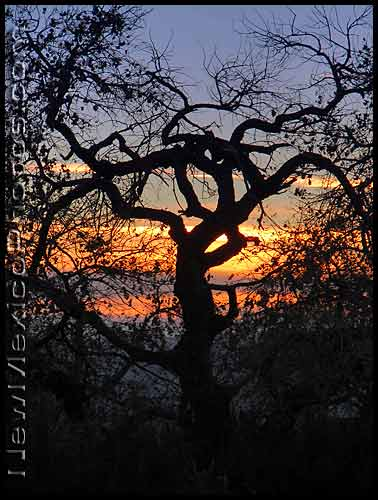 winter tree branches at sunset in Elena Gallegos Picnic Area