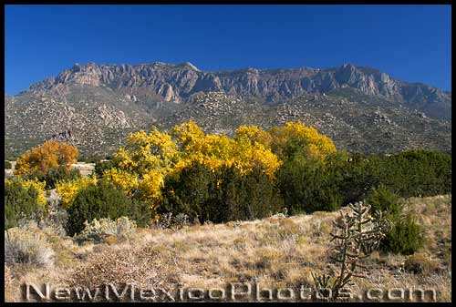 autumn at elena gallegos picnic area