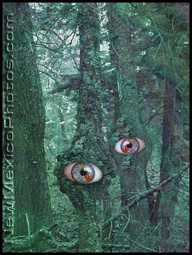 eyes bulge out of trees in a spooky forest