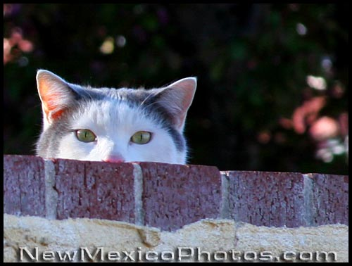 a cat keeps a close eye on a stranger in his neighborhood
