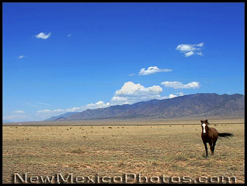 lone horse on the New Mexico plains
