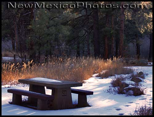 picnic table in the Jemez