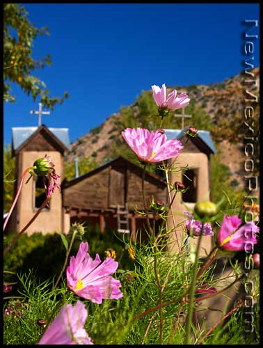 flowers at santuario de chimayo