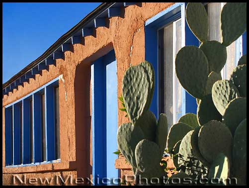 a stucco wall, with prickly pear cactus in front of it, lit by the late afternoon sun