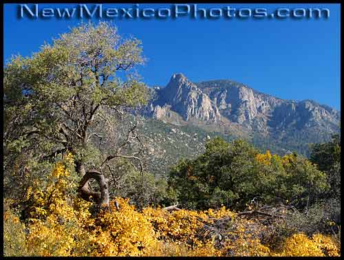 photo of autumn colors at elena gallegos picnic area