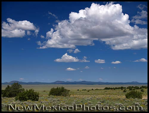 western plains of new mexico