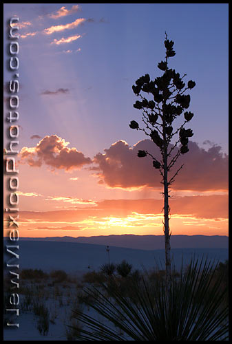 white sands with yucca at sunrise