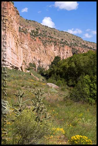 Cholla and wildflowers in a meadow leading up to the tuff walls of Frijoles Canyon