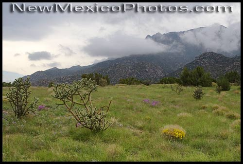 green grass and wildflowers at elena gallegos picnic area