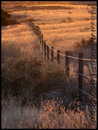 The late afternoon sun casts its golden glow over a fence in the Sandia foothills
