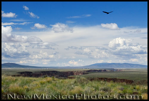 a turkey vulture swoops over the Rio Grande Gorge