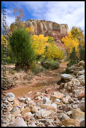The wash leading to Kitchen Mesa at Ghost Ranch, flanked by autumn trees