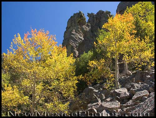 the aspens are starting to turn, high in the Sandias