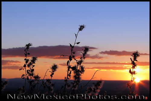 A late autumn sunset in the Sandia foothills silhouettes dry weeds