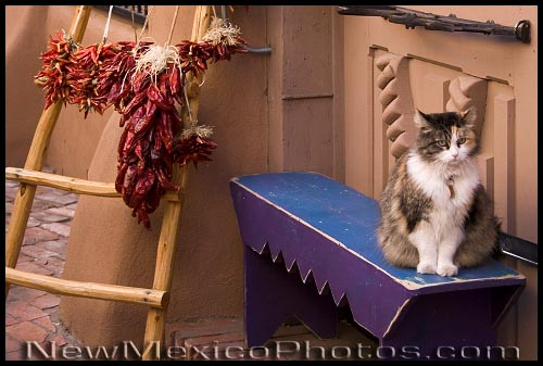 A cat in Old Town Albuquerque regards the photographer with deep mistrust