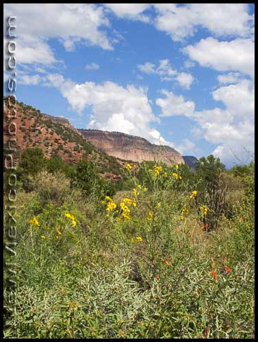 autumn wildflowers in San Diego Canyon, along the Jemez Mountain Trail National Scenic Byway