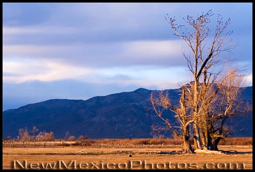 Golden hour, a bit north of Taos, on a late November afternoon
