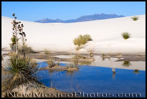 A pool of water at White Sands National Monument, as clear and smooth as glass.