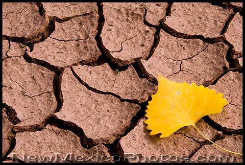 A lone cottonwood leaf rests upon cracked, dried mud at Ghost Ranch