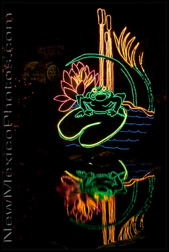 A frog and its reflection in a pond, at the River of Lights, Rio Grande Botanic Garden