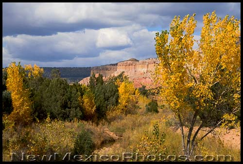 An intense palette of rich and varied colors signals autumn's arrival at Ghost Ranch