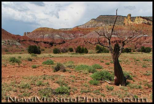 A stunted tree is framed by the many colors of Chimney Rock and environs