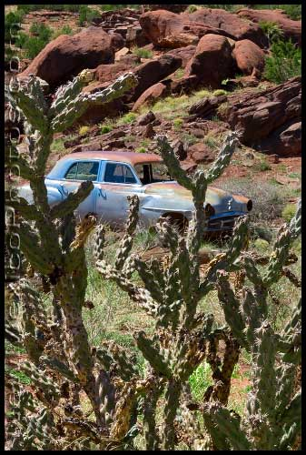 A long-abandoned car is framed by cholla cactus and the red rocks of the Jemez