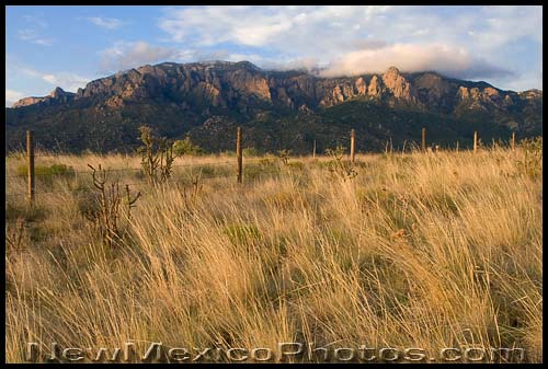 A late summer, late afternoon view of the Sandia mountains from the foothills