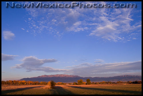 Golden hour at Los Poblanos Open Space, with the Sandia mountains in the background