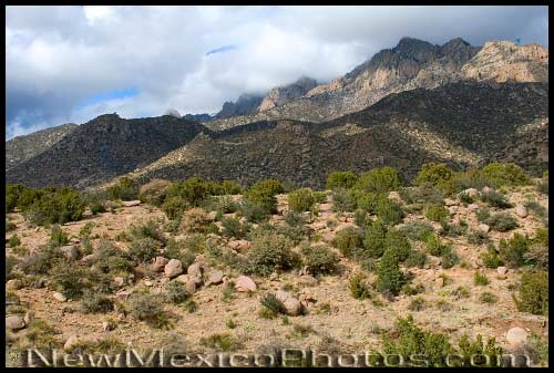 A blustery March day in the Sandia foothills, when Mother Nature couldn't decide whether it was winter or spring