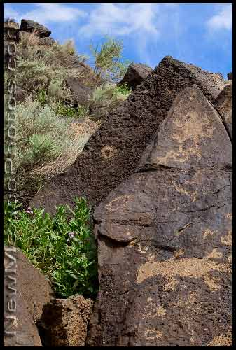 Petroglyphs at the Piedras Marcadas site in Albuquerque include a couple of lizards