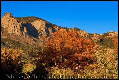 Colorful fall foliage in the Sandia foothills