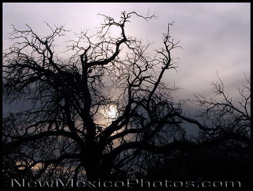 The bare branches of a silhouetted tree remind the viewer that spring is still partly a promise