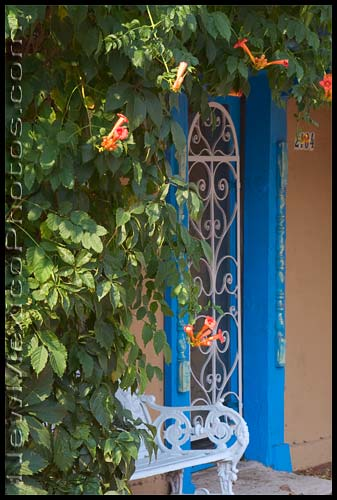 A flowering trumpet vine shades a small bench in Old Town Albuquerque