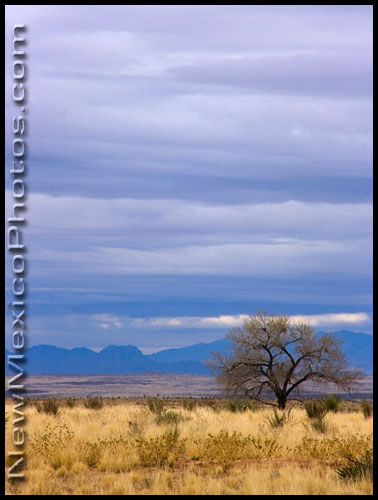 A lone tree along the side of I-10, in southern New Mexico