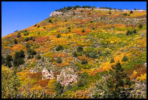 Fall colors are splashed across a hillside in the Sandias
