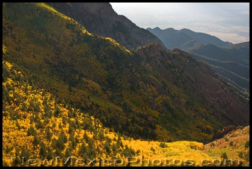 yellow aspens on the west side of the sandia mountains