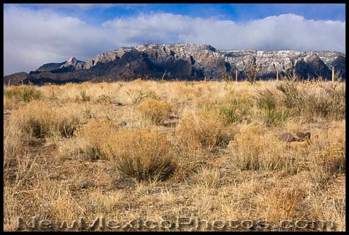 A recent snow in the Sandia mountains, as seen from the foothills