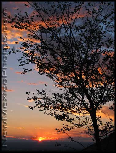 a tree is silhouetted by the setting sun