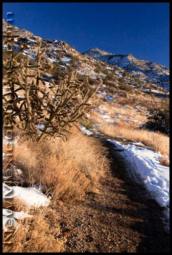 remnants of the last snow of 2009 in the Sandia foothills
